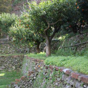 marmellate di Agrumi di Sicilia