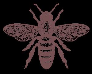 illustrazione di ape simbolo della biodiversità