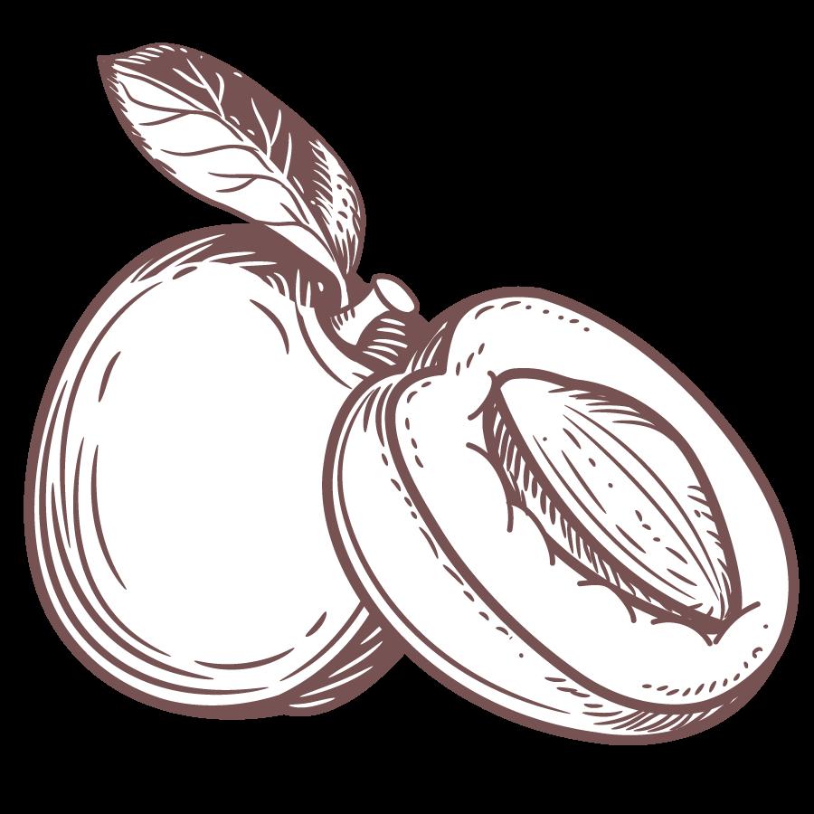 illustrazione di Albicocca di varietà Pinkcot